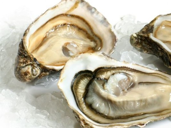 Invest now! OysterCoin. Бизнес идеи